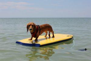 Boogie boarding!