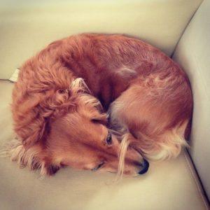 The donut sleep position